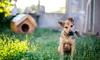 How to Create a Dog Friendly Backyard