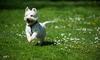 dog running in grass field