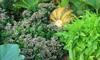 close up veggie garden