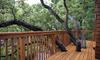 A wood deck built around tree limbs.