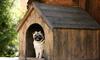 A dog inside a Kennel.