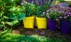 potted flower garden
