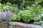 plants in a raised flower bed