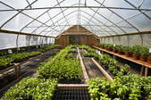 Greenhouse Heating: How to Do it With Kerosene