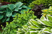 A collection of landscaping plants in different shades of greens.