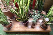 Your mini deck, dressed up with plants.
