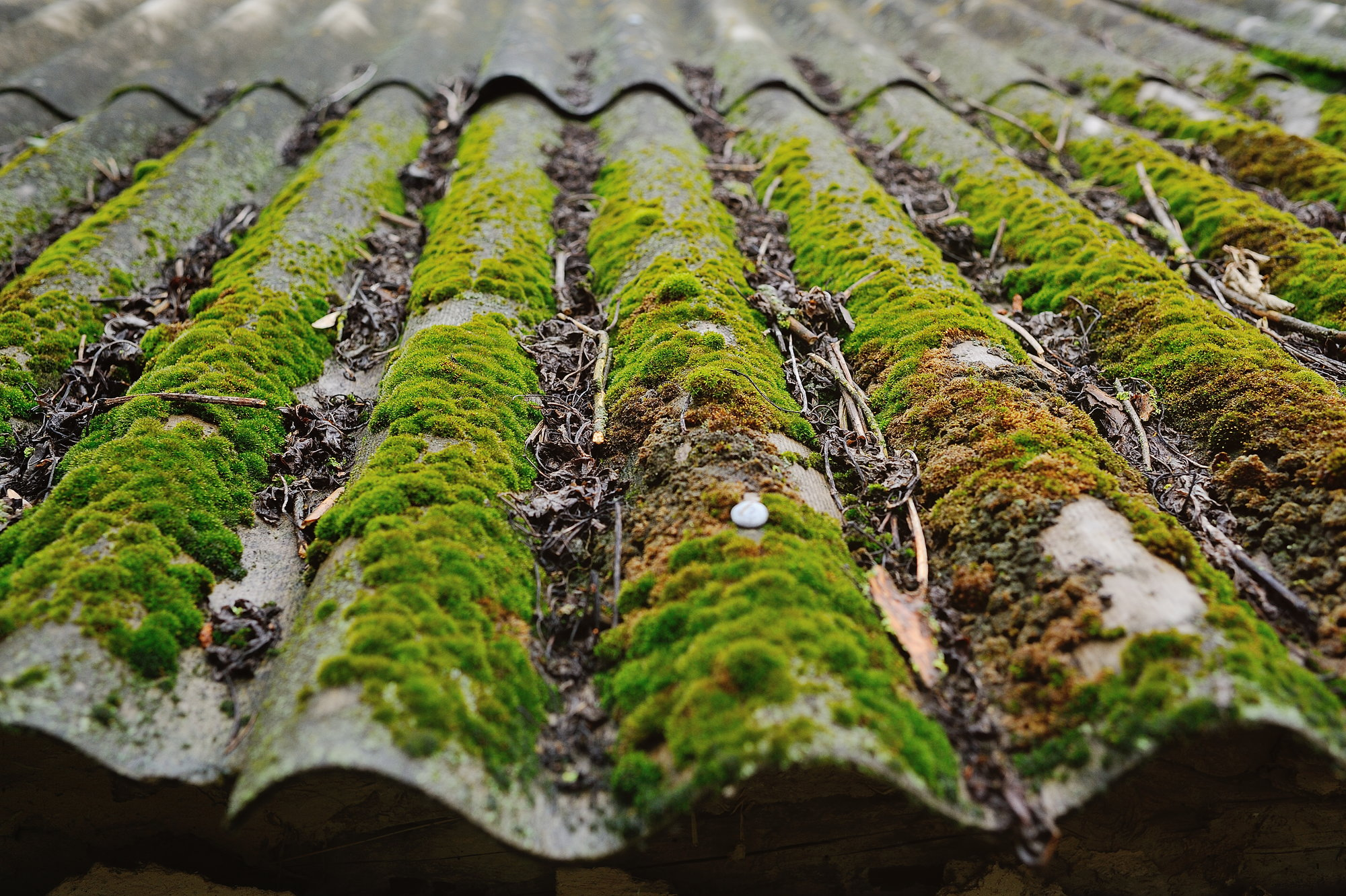 How To Remove Moss From A Roof Doityourself Com