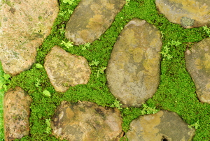 A stone and moss walkway.