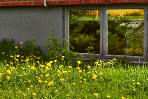 A basement window looking out onto a lawn.