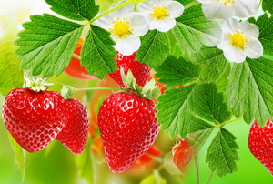 A flowering strawberry fruit in the sun