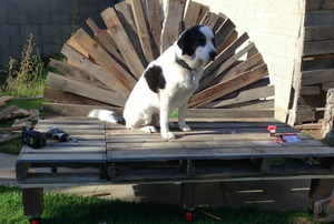 An indoor/outdoor upcycled pallet daybed, sporting a regal dog.