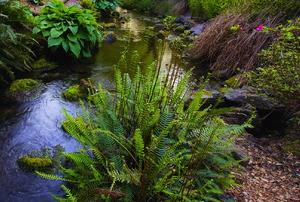A beautiful bog garden.