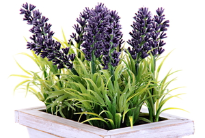 lavender plant in a container