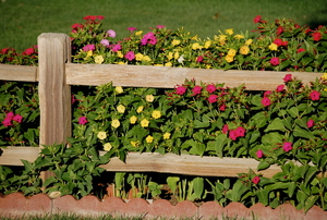 a split rail fence with flowers growing through