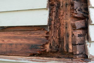Dry rot on the side of a house.