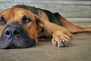 A dog laying on concrete basement floors.