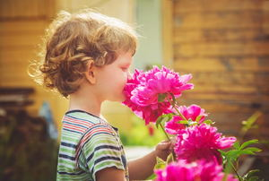 A young boy smelling a pink peony flower.