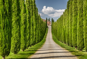 dirt pathway, leading to a house, lined by trimmed cypress trees