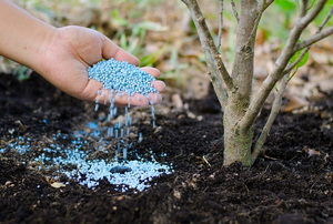 How to Use Fertilizer in Your Yard to Prep for Spring