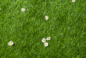 Lawn with white flowers