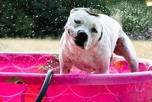 A dog shakes water off in a baby pool