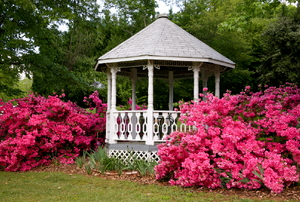 White gazebo surrounded by pink plants and greenery