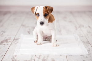 A puppy sitting on a pee pad on a wood floor.