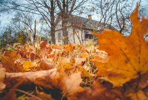A house in the background with leaves in the foreground.