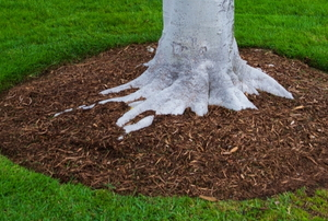 Mulch around a tree.