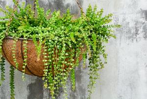 A planter.