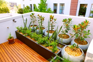An urban balcony with a container garden.