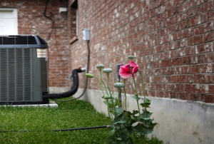 An AC unit outdoors next to a rose bush