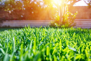 A lawn with sun shining on it.