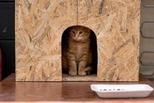 cat in outdoor cat house