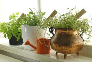 A shelf with plants