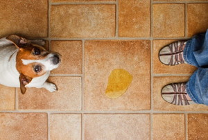 puppy and pee puddle on tile flooring
