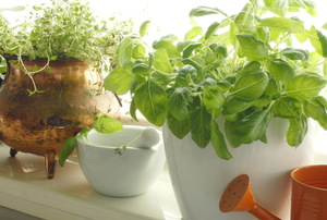 potted plants on a windowsill in bright light