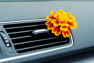 orange and yellow flower in vehicle's air vent