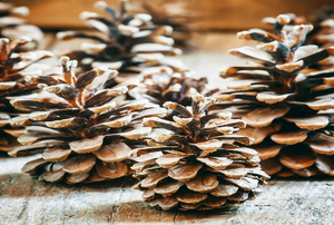 A grouping of pinecones on a wood surface.