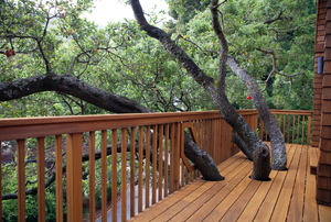 A wood deck built around tree limbs.