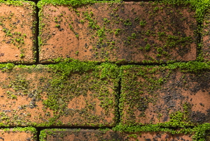 Moss on a brick wall.