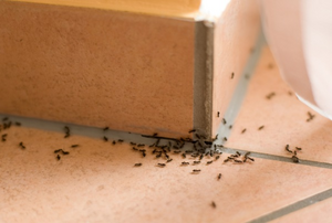 ants crawling around on a tile surface