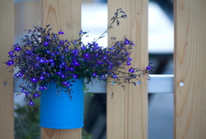 A painted aluminum can with blue flowers inside hanging on a fence.