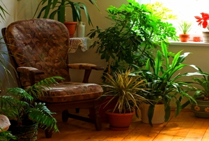 A comfortable chair surrounded by houseplants.