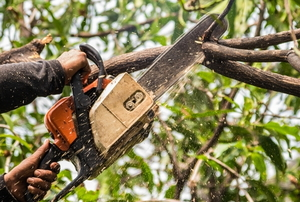 chainsaw cutting tree branch