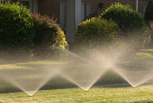 Several bushes line the outside of a house while sprinklers water the yard.