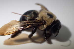 bee with shadow on white background
