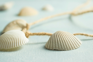 shell and twine necklace