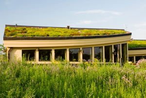 A green roof on a building.