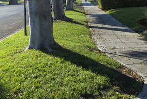 grass and trees on the curb next to a public sidewalk